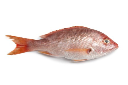 fresh seafood: Whole fresh red snapper isolated on white background