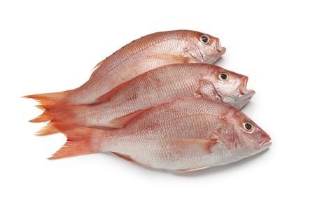 흰색 배경에 신선한 빨간 snappers