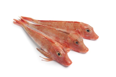 Red Tub gurnard fishes on white background  photo