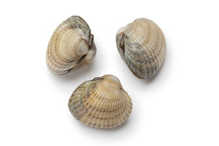 seafish:  Cockles on white background Stock Photo