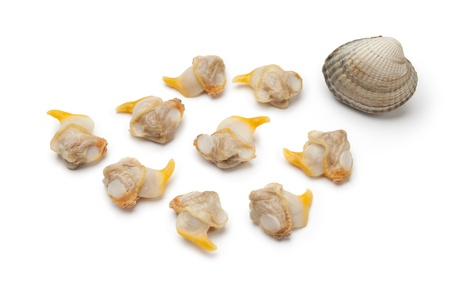 seafish: Fresh cooked cockles on white background