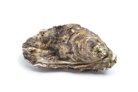 oyster shell:  Whole single fresh raw oyster on white background Stock Photo
