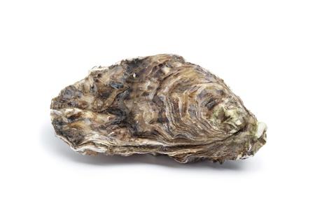 Whole single fresh raw oyster on white background