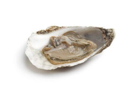 Single fresh raw oyster in an open shell on white background photo