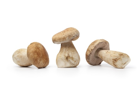 cep: Whole fresh cep mushrooms isolated on white background Stock Photo