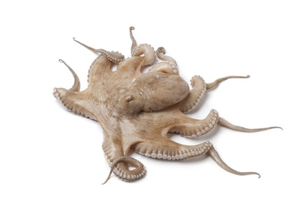 tentacles: Todo �nico pulpo crudo dulce aislada sobre fondo blanco