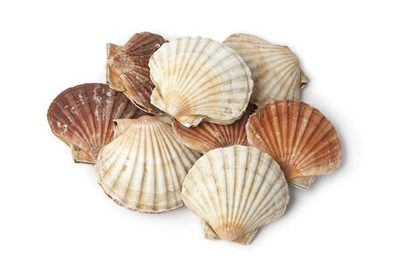 coquille: Fresh closed scallops on white background