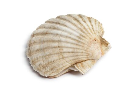 coquille: Whole single fresh closed scallop on white background