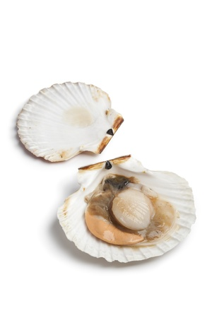 coquille: Fresh open scallop in the shell on white background