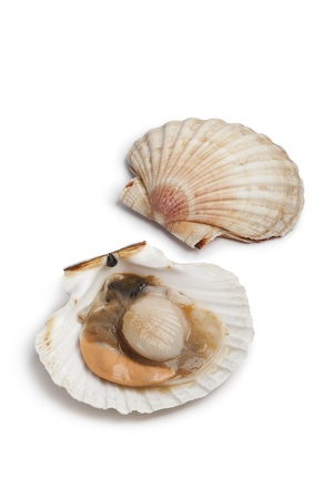 scallop shell: Fresh open scallop in the shell on white background