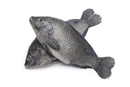Fresh raw Tilapia fishes on white background