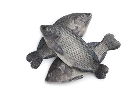 tilapia:  Fresh raw Tilapia fishes on white background Stock Photo