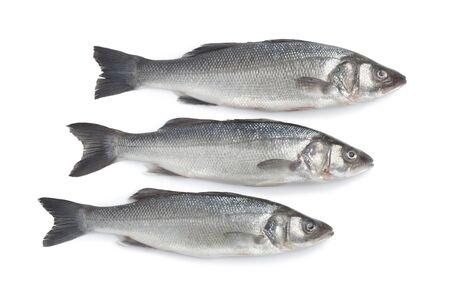 bass fish:  Fresh whole sea basses on white background