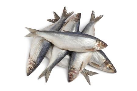 Whole fresh raw herring on white background Stock Photo - 9400547