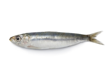 Whole single fresh sardine on white background Stock Photo - 9745903