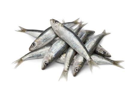 sardine:  Sardine crudi freschi su sfondo bianco
