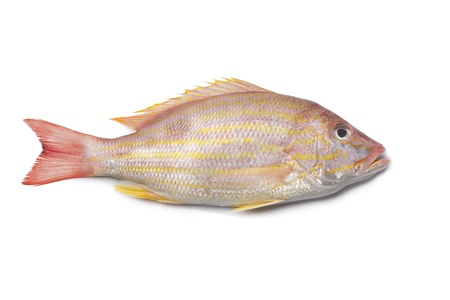 Whole single fresh Lane snapper on white background Stock Photo - 9745914