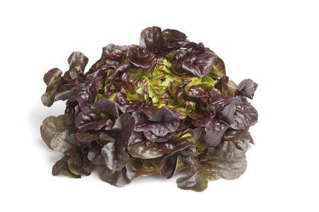 lettuce:  Oak leaf lettuce on white background Stock Photo