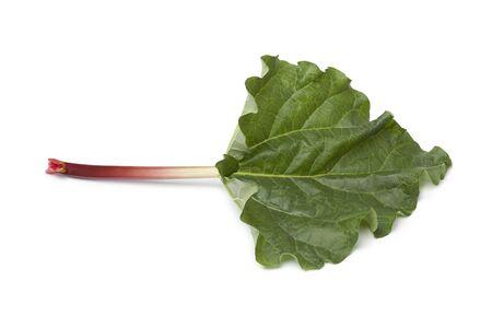 rheum:  Fresh Rhubarb stalk and leaf on white background Stock Photo