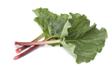 rhubarb:  Fresh Rhubarb stalks and leaves on white background
