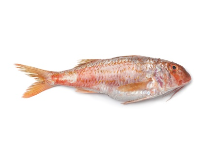 Whole single fresh Red mullet at white background Stock Photo - 9744650