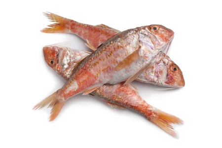 mullet: Fresh Red mullet fishes at white background