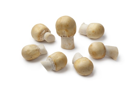 arvensis:  Fresh Horse Mushrooms on white background