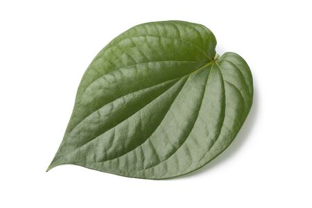 betel leaf: Piper betle leaf on white background