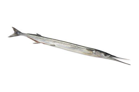 Fresh raw garfish on white background photo
