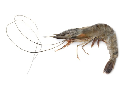 tiger shrimp:  Whole single fresh black tiger shrimps on white background Stock Photo