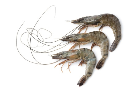 prawns:  Whole fresh black tiger shrimps on white background