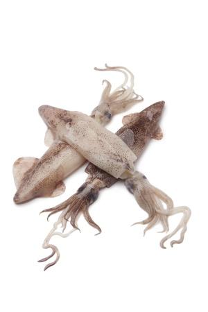 Fresh raw squid on white background
