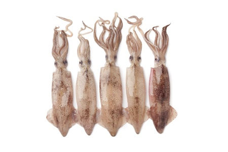 Calamar fresco crudo sobre fondo blanco
