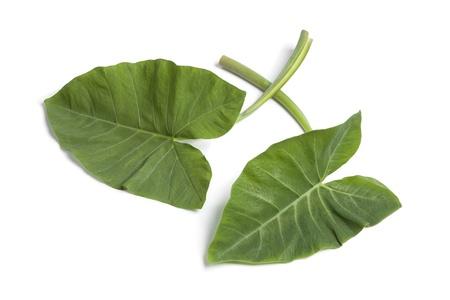 taro: Whole fresh Taro leaves on white background