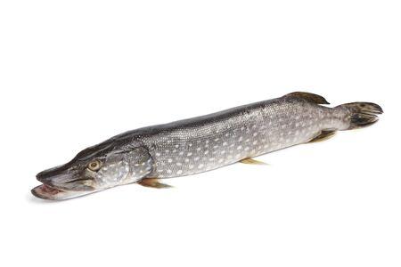 northern pike: Fresh Northern pike fish on white background