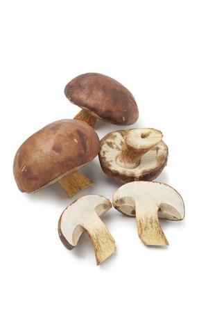bolete:  Fresh Bay Bolete mushrooms on white background