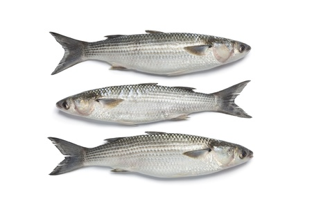 mullet: Three whole fresh grey mullets on white background Stock Photo