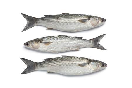 grey mullet: Three whole fresh grey mullets on white background Stock Photo