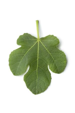 Single fresh fig leaf on white background