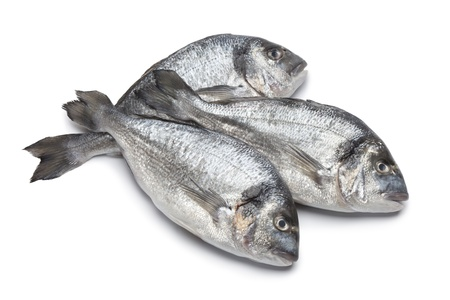 bream fish:  Gilt head breams on white background Stock Photo