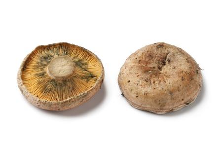 milkcap: Milkcap mushrooms on white background
