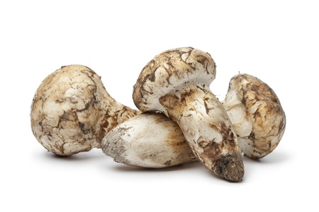 pine three: Matsutake mushrooms on white background