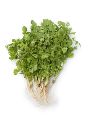 coriander: Fresh green cilantro with roots on white background