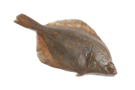 plaice: Whole single fresh raw plaice fishes on white background