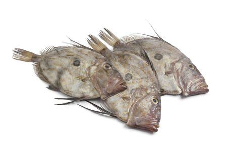 Fresh John Dory fishes on white background