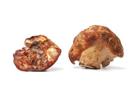 Lobster mushrooms on white background