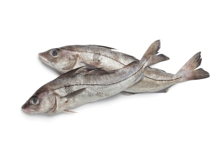 Whole single fresh raw haddock fishes at white background