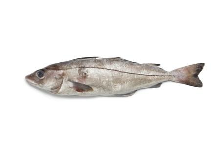 haddock:  Whole single fresh raw haddock fish at white background
