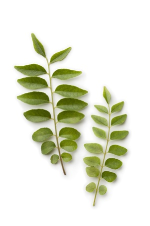 Fresh curry leaves on white background Banque d'images