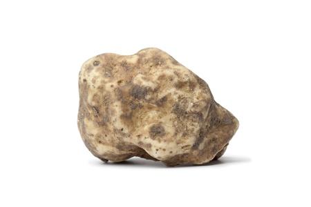 white truffle:  Whole single white truffle on white background